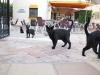 balashova-gatos