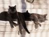 gilarova-gatos